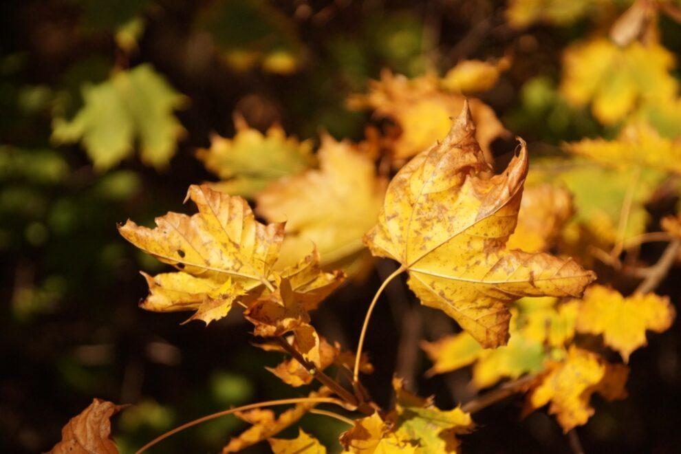 Witamy jesień…